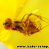 ▽อำพัน บอลติกขัดมันมีแมลงภายใน Genuine Baltic Amber (0.73ct.)